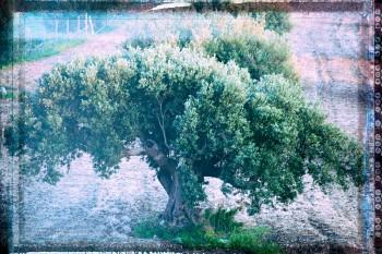 Photo © Luca Babini