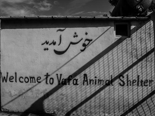 ©Babak Gharaei
