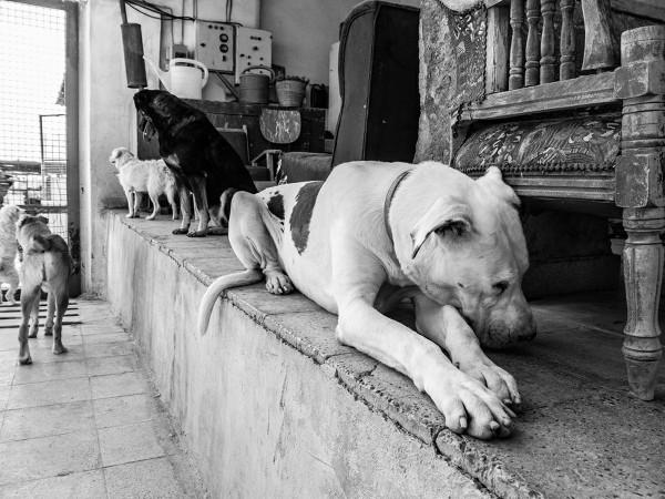 Piggy the blind dog ©Babak Gharaei