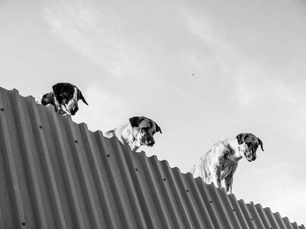The roof guards ©Babak Gharaei