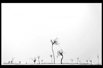 """Untitled"" (Traces); 2013; Ink on Paper; 25""x 40"" ©Mahmoud Hamadani"